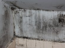 mould allergy prevention